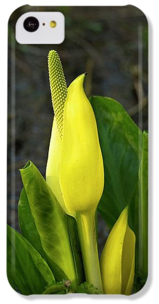 Cuckoo iPhone 5c Case - Cuckoo Pint (arum Maculatum) by Duncan Shaw