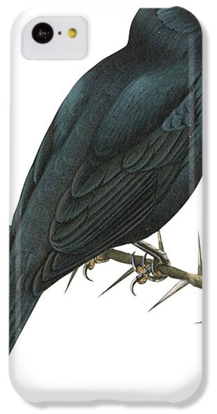 Cuckoo iPhone 5c Case - Cuckoo Shrike by Anonymous