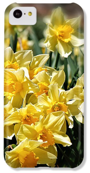 Daffodil IPhone 5c Case by Bill Wakeley