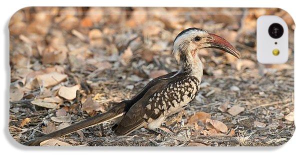 Damara Red-billed Hornbill Foraging IPhone 5c Case