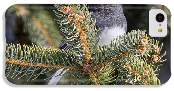 Dark-eyed Junco  IPhone 5c Case