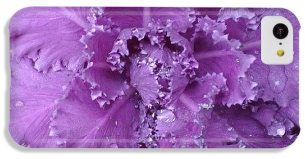 #decorative #cabbage #plant After A IPhone 5c Case by Stacey Lewis