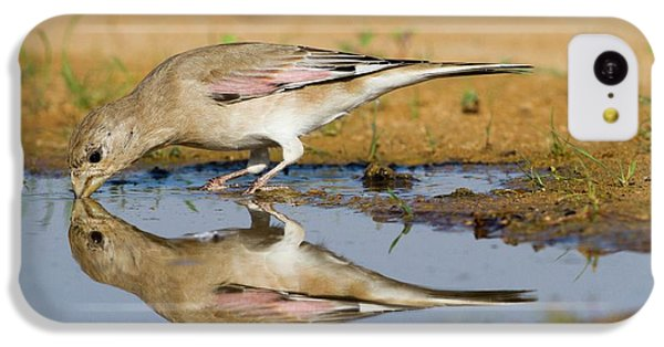 Desert Finch (carduelis Obsoleta) IPhone 5c Case by Photostock-israel