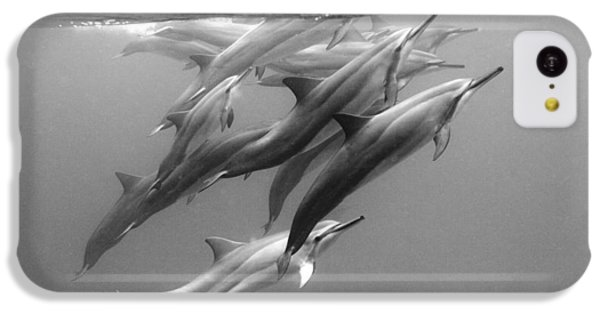 Dolphin Pod IPhone 5c Case by Sean Davey