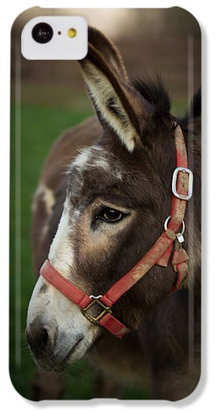 Donkey IPhone 5c Case by Shane Holsclaw