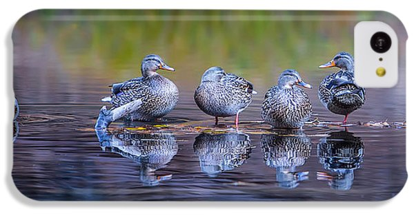 Ducks In A Row IPhone 5c Case by Larry Marshall