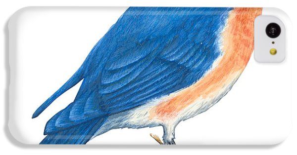 Eastern Bluebird IPhone 5c Case by Anonymous
