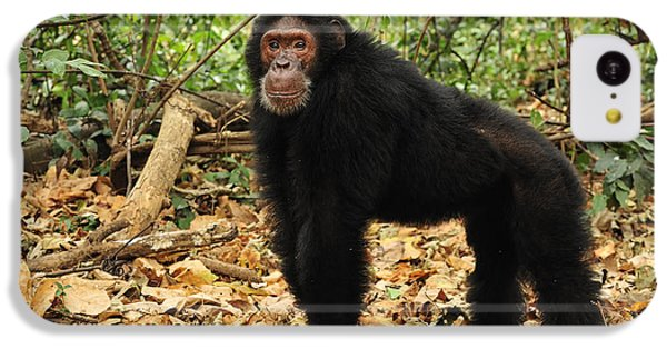 Eastern Chimpanzee Gombe Stream Np IPhone 5c Case