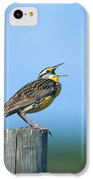 Eastern Meadowlark IPhone 5c Case by Paul J. Fusco