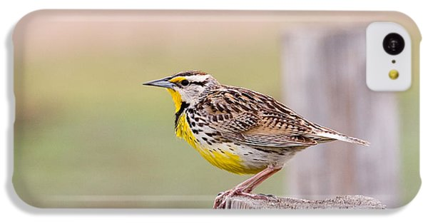 Eastern Meadowlark Sturnella Magna IPhone 5c Case by Gregory G. Dimijian