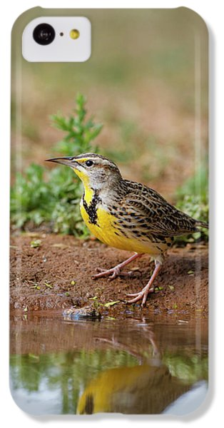 Eastern Meadowlark (sturnella Magna IPhone 5c Case