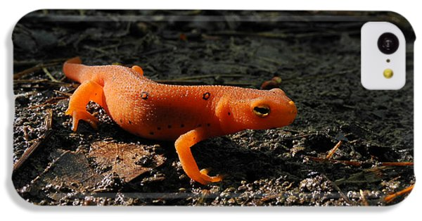 Eastern Newt Red Eft IPhone 5c Case