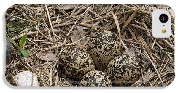 Killdeer iPhone 5c Case - Eggs In Killdeer Nest by Linda Freshwaters Arndt