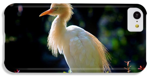 Egret With Back Lighting IPhone 5c Case by Zoe Ferrie
