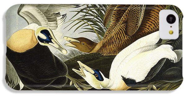 Eider Ducks IPhone 5c Case by John James Audubon