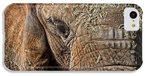 Elephant Never Forgets IPhone 5c Case by Miroslava Jurcik
