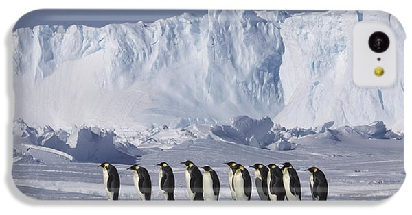 Emperor Penguins Walking Antarctica IPhone 5c Case by Frederique Olivier