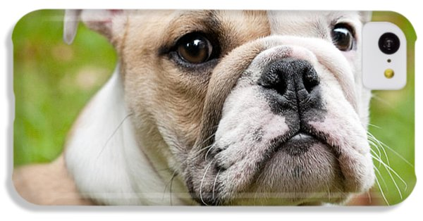 English Bulldog Puppy IPhone 5c Case