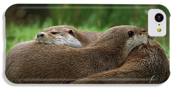 European River Otter Lutra Lutra IPhone 5c Case by Ingo Arndt