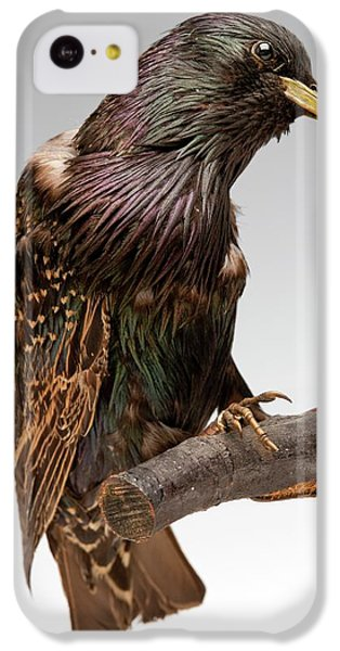 European Starling IPhone 5c Case by Ucl, Grant Museum Of Zoology