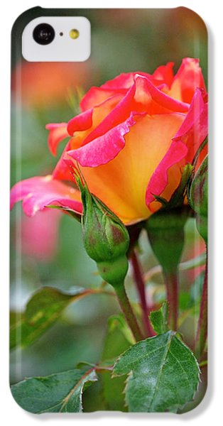 Eye Candy IPhone 5c Case by Rona Black