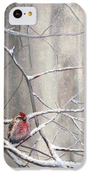 Eyeing The Feeder Alaskan Redpoll In Winter IPhone 5c Case