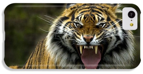 Eyes Of The Tiger IPhone 5c Case by Mike  Dawson