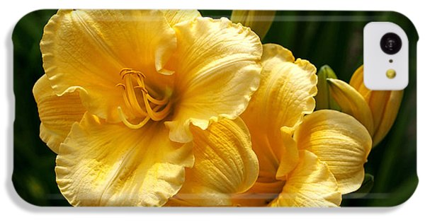 Fancy Yellow Daylilies IPhone 5c Case