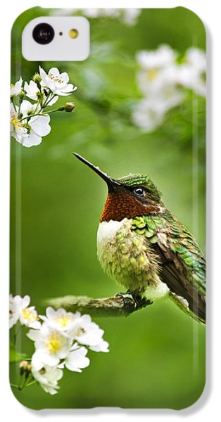 Fauna And Flora - Hummingbird With Flowers IPhone 5c Case by Christina Rollo