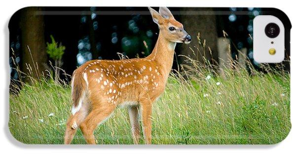 Deer iPhone 5c Case - Fawn by Shane Holsclaw