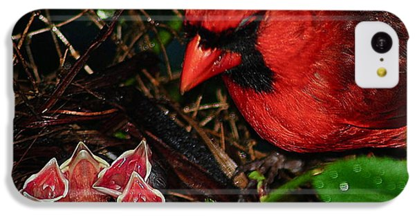 Bluejay iPhone 5c Case - Feed Me Daddy by Frozen in Time Fine Art Photography