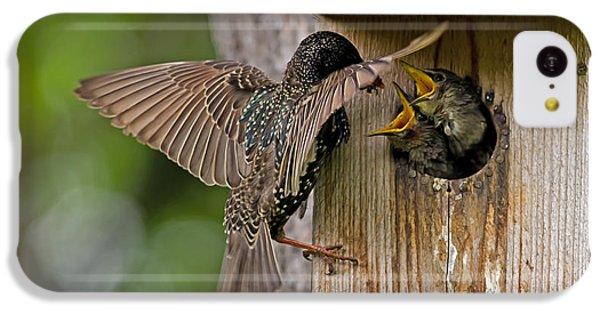 Feeding Starlings IPhone 5c Case by Torbjorn Swenelius