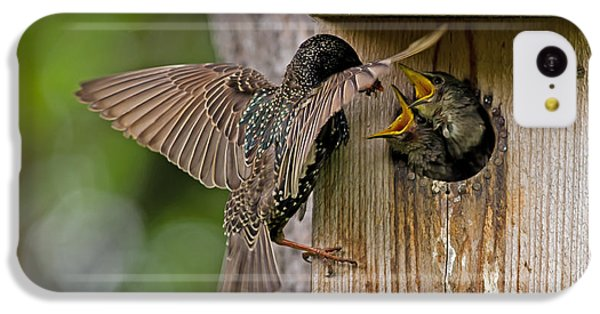 Feeding Starlings IPhone 5c Case by Torbjorn Swenelius