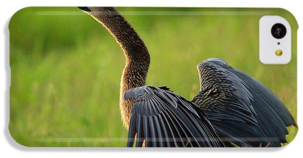 Anhinga iPhone 5c Case - Female Anhinga Drying Out Wings by Maresa Pryor