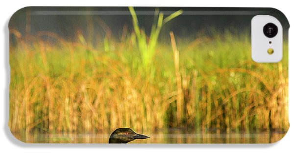 Loon iPhone 5c Case - Female Common Loon With Newborn Chick by Chuck Haney
