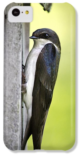 Tree Swallow On Nestbox IPhone 5c Case