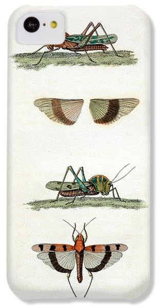 Field Crickets IPhone 5c Case by General Research Division/new York Public Library