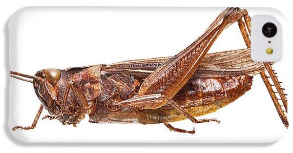 Field Grasshopper IPhone 5c Case