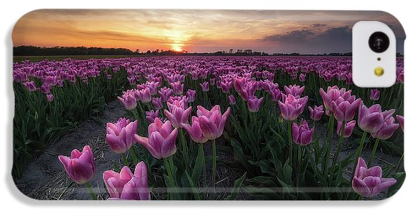 Tulip iPhone 5c Case - Field Of Tulips by Amada Terradillos S.