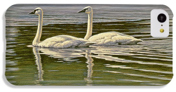 Swan iPhone 5c Case - First Open Water - Trumpeters by Paul Krapf