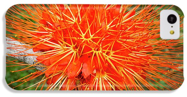 Belize iPhone 5c Case - Flame Of Panama Flower (brownea by William Sutton