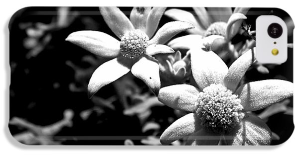IPhone 5c Case featuring the photograph Flannel Flower by Miroslava Jurcik