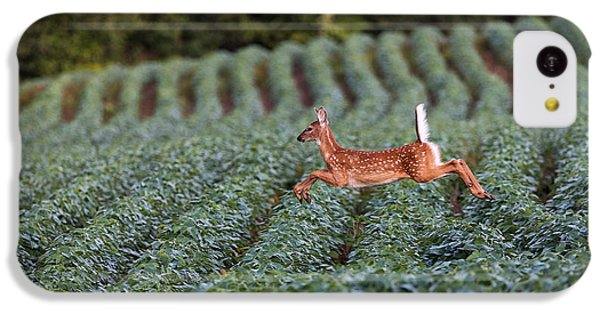 Deer iPhone 5c Case - Flight Of The White-tailed Deer by Everet Regal