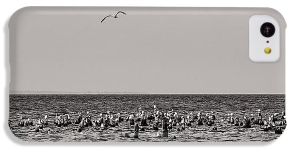 Flock Of Seagulls In Black And White IPhone 5c Case by Sebastian Musial