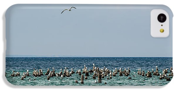 Flock Of Seagulls IPhone 5c Case by Sebastian Musial