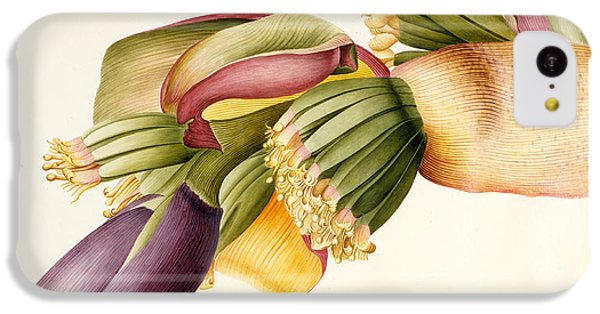 Flower Of The Banana Tree  IPhone 5c Case by Georg Dionysius Ehret