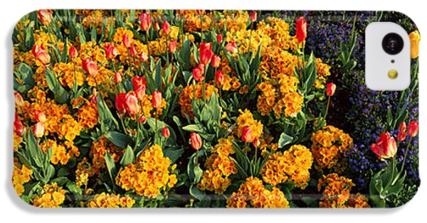 Flowers In Hyde Park, City IPhone 5c Case by Panoramic Images