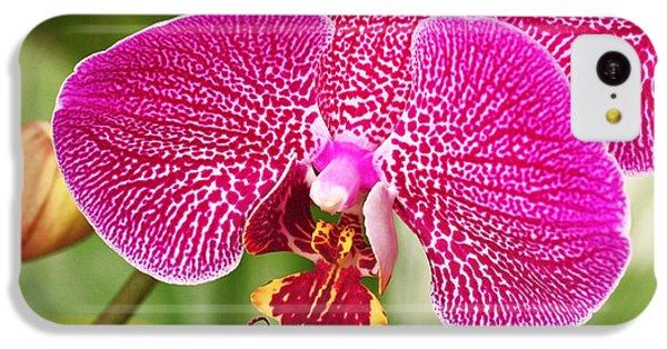 Fuchsia Moth Orchid IPhone 5c Case