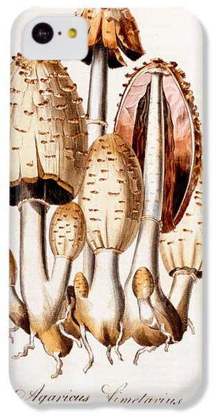 Fungi IPhone 5c Case by English School