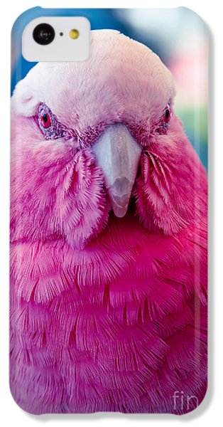 Galah - Eolophus Roseicapilla - Pink And Grey - Roseate Cockatoo Maui Hawaii IPhone 5c Case